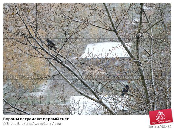 Вороны встречают первый снег, фото № 98462, снято 15 октября 2007 г. (c) Елена Блохина / Фотобанк Лори