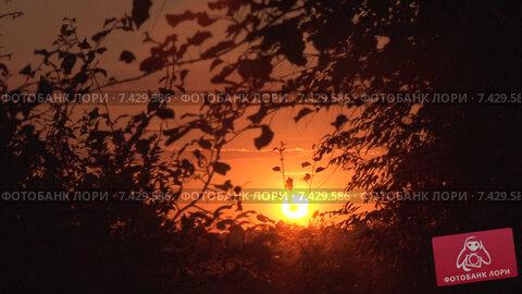 Восход из кустов – «Солнце в гнезде». Timelapse. Скорость х64. Стоковое видео, видеограф Mike The / Фотобанк Лори