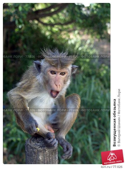 Возмущенная обезьяна, фото № 77026, снято 1 июня 2007 г. (c) Валерий Шанин / Фотобанк Лори
