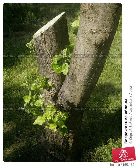 Возрождение яблони, фото № 165162, снято 12 июня 2007 г. (c) Сергей Байков / Фотобанк Лори