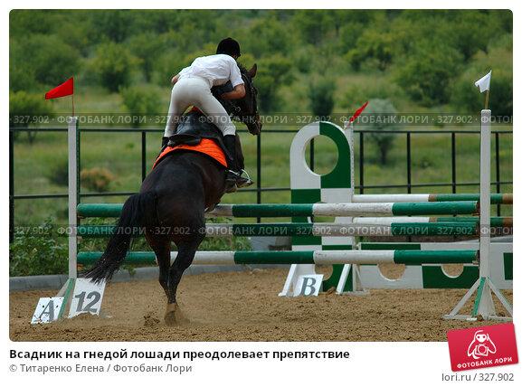 Всадник на гнедой лошади преодолевает препятствие, фото № 327902, снято 15 июня 2008 г. (c) Титаренко Елена / Фотобанк Лори