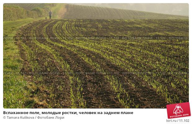 Вспаханное поле, молодые ростки, человек на заднем плане, фото № 11102, снято 15 октября 2006 г. (c) Tamara Kulikova / Фотобанк Лори