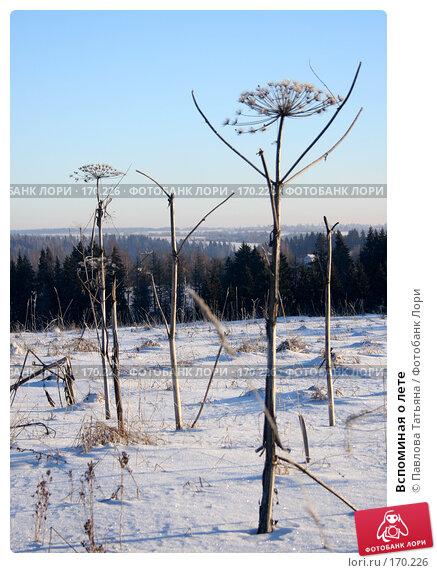 Купить «Вспоминая о лете», фото № 170226, снято 4 января 2008 г. (c) Павлова Татьяна / Фотобанк Лори