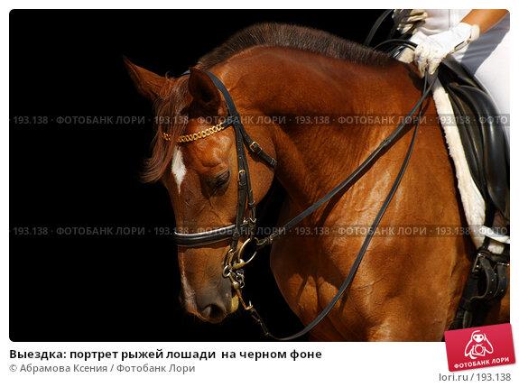 Выездка: портрет рыжей лошади  на черном фоне, фото № 193138, снято 12 августа 2006 г. (c) Абрамова Ксения / Фотобанк Лори