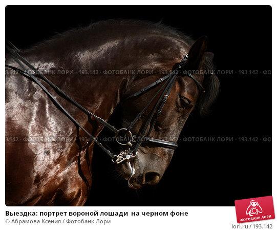 Купить «Выездка: портрет вороной лошади  на черном фоне», фото № 193142, снято 12 августа 2006 г. (c) Абрамова Ксения / Фотобанк Лори