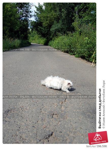 Купить «Выйти на след добычи», фото № 396598, снято 2 августа 2008 г. (c) Исаев Алексей / Фотобанк Лори
