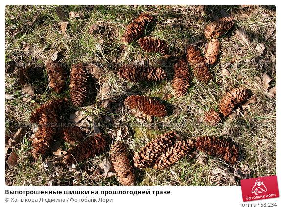 Купить «Выпотрошенные шишки на прошлогодней траве», фото № 58234, снято 14 апреля 2007 г. (c) Ханыкова Людмила / Фотобанк Лори