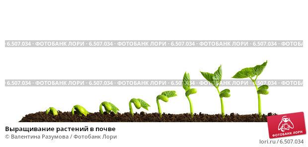 Купить «Выращивание растений в почве», фото № 6507034, снято 8 апреля 2014 г. (c) Валентина Разумова / Фотобанк Лори