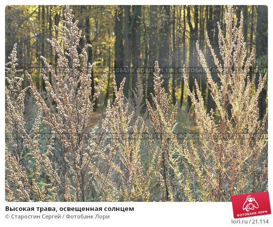 Высокая трава, освещенная солнцем, фото № 21114, снято 1 октября 2005 г. (c) Старостин Сергей / Фотобанк Лори
