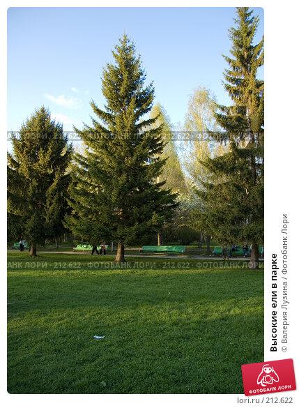 Высокие ели в парке, фото № 212622, снято 20 мая 2007 г. (c) Валерия Потапова / Фотобанк Лори