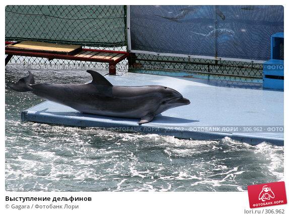 Выступление дельфинов, фото № 306962, снято 1 июля 2006 г. (c) Gagara / Фотобанк Лори