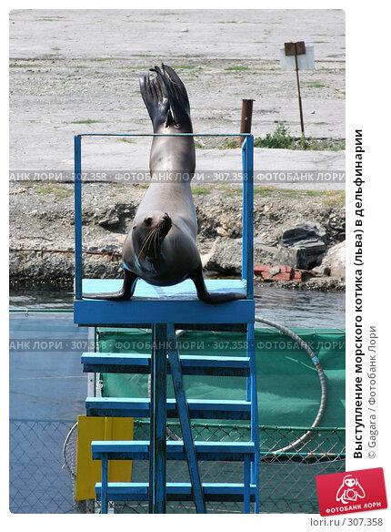Купить «Выступление морского котика (льва) в дельфинарии», фото № 307358, снято 1 июля 2006 г. (c) Gagara / Фотобанк Лори