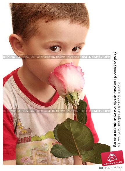 Взгляд мальчика который нюхает розовую розу, фото № 195146, снято 12 октября 2007 г. (c) Останина Екатерина / Фотобанк Лори