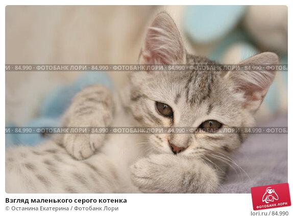 Взгляд маленького серого котенка, фото № 84990, снято 7 сентября 2007 г. (c) Останина Екатерина / Фотобанк Лори