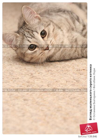 Взгляд маленького серого котенка, фото № 139846, снято 9 ноября 2007 г. (c) Останина Екатерина / Фотобанк Лори