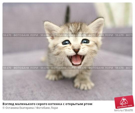 Взгляд маленького серого котенка с открытым ртом, фото № 59670, снято 4 июля 2007 г. (c) Останина Екатерина / Фотобанк Лори