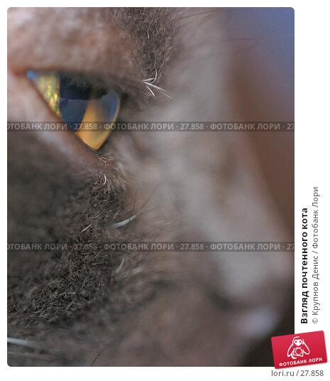 Купить «Взгляд почтенного кота», фото № 27858, снято 18 февраля 2007 г. (c) Крупнов Денис / Фотобанк Лори
