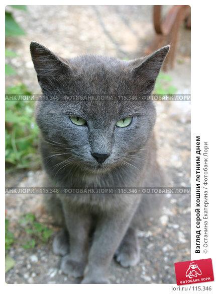 Купить «Взгляд серой кошки летним днем», фото № 115346, снято 10 августа 2005 г. (c) Останина Екатерина / Фотобанк Лори