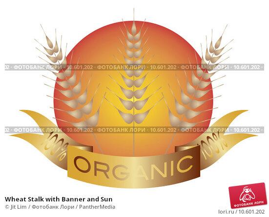 Wheat Stalk with Banner and Sun. Стоковая иллюстрация, иллюстратор Jit Lim / PantherMedia / Фотобанк Лори