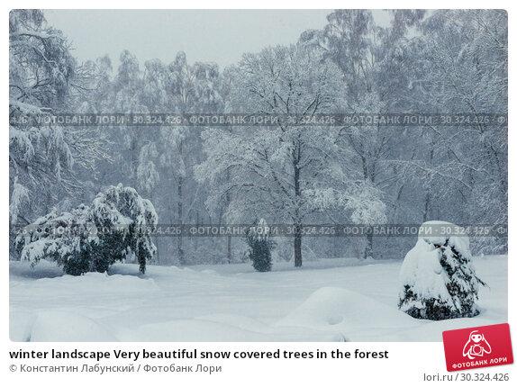 Купить «winter landscape Very beautiful snow covered trees in the forest», фото № 30324426, снято 4 февраля 2018 г. (c) Константин Лабунский / Фотобанк Лори