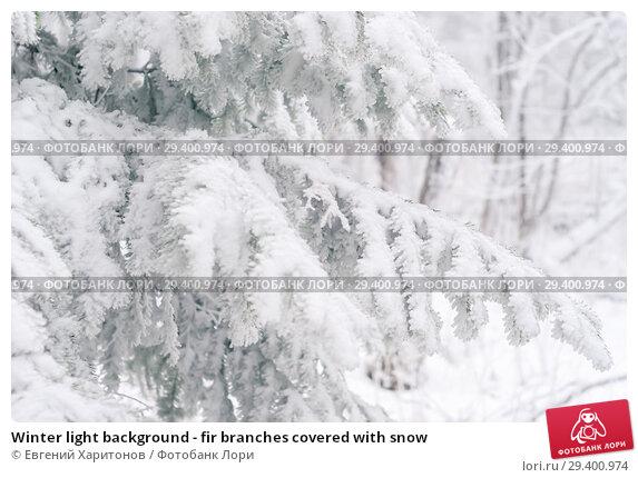 Купить «Winter light background - fir branches covered with snow», фото № 29400974, снято 2 ноября 2018 г. (c) Евгений Харитонов / Фотобанк Лори