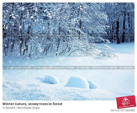 Купить «Winter nature, snowy trees in forest», фото № 27163802, снято 4 января 2017 г. (c) ElenArt / Фотобанк Лори