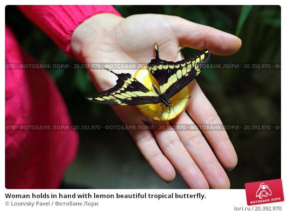 Купить «Woman holds in hand with lemon beautiful tropical butterfly.», фото № 20392970, снято 4 ноября 2014 г. (c) Losevsky Pavel / Фотобанк Лори