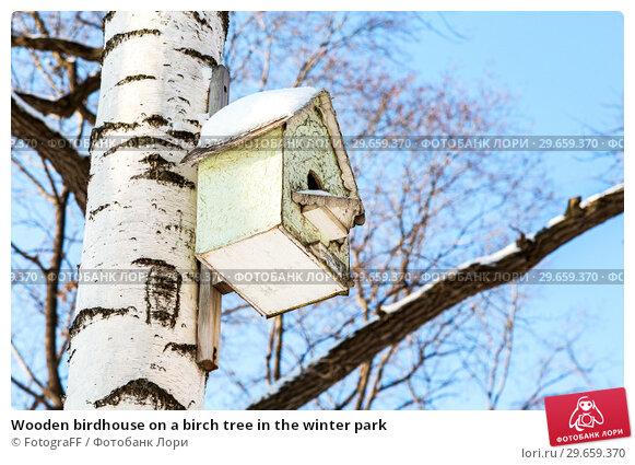 Купить «Wooden birdhouse on a birch tree in the winter park», фото № 29659370, снято 23 февраля 2018 г. (c) FotograFF / Фотобанк Лори