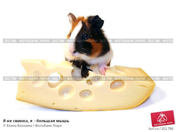 Я не свинка, я  - большая мышь, фото № 252786, снято 15 апреля 2008 г. (c) Елена Блохина / Фотобанк Лори