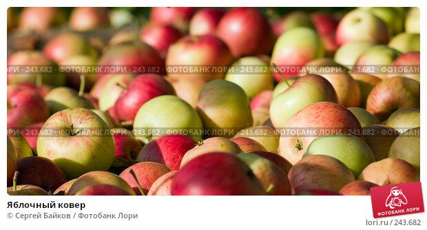 Купить «Яблочный ковер», фото № 243682, снято 22 сентября 2007 г. (c) Сергей Байков / Фотобанк Лори