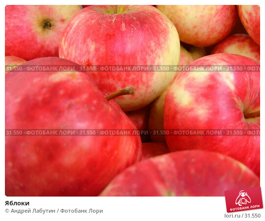 Купить «Яблоки», фото № 31550, снято 12 октября 2005 г. (c) Андрей Лабутин / Фотобанк Лори