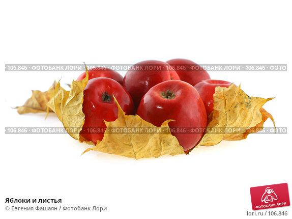 Яблоки и листья, фото № 106846, снято 29 октября 2007 г. (c) Евгения Фашаян / Фотобанк Лори