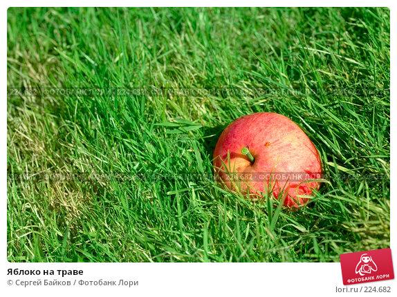 Яблоко на траве, фото № 224682, снято 22 сентября 2007 г. (c) Сергей Байков / Фотобанк Лори