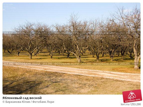 Яблоневый сад весной, фото № 253290, снято 29 марта 2008 г. (c) Биржанова Юлия / Фотобанк Лори