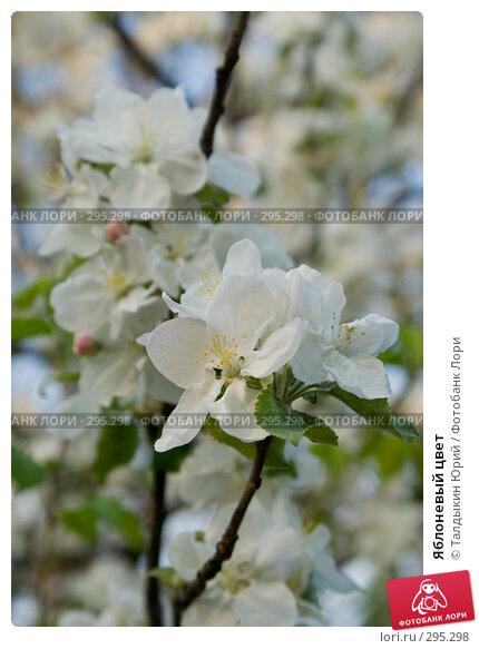 Яблоневый цвет, фото № 295298, снято 22 мая 2008 г. (c) Талдыкин Юрий / Фотобанк Лори