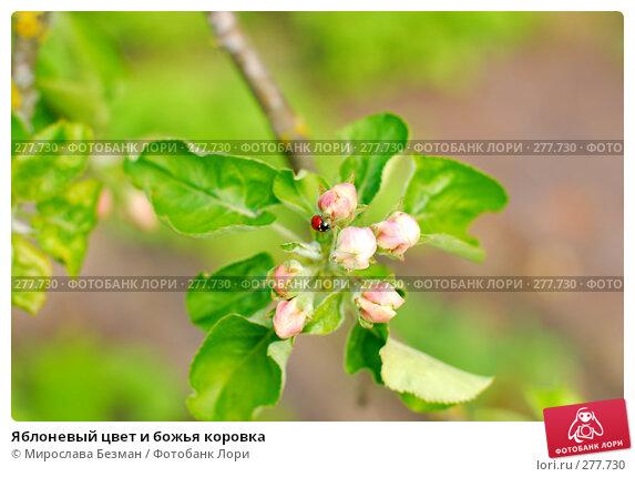 Яблоневый цвет и божья коровка, фото № 277730, снято 27 апреля 2008 г. (c) Мирослава Безман / Фотобанк Лори