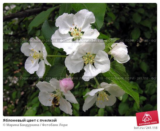 Яблоневый цвет с пчелкой, фото № 241118, снято 23 мая 2006 г. (c) Марина Бандуркина / Фотобанк Лори