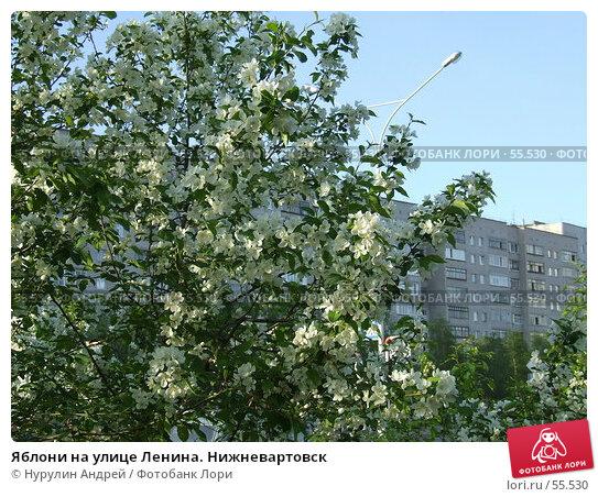 Яблони на улице Ленина. Нижневартовск, фото № 55530, снято 22 июня 2007 г. (c) Нурулин Андрей / Фотобанк Лори