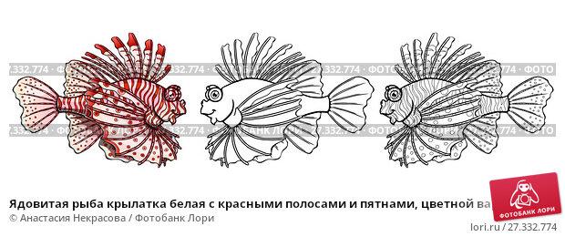 Купить «Ядовитая рыба крылатка белая с красными полосами и пятнами, цветной вариант и черный контур. Изолированная на белом иллюстрация морского животного, страница для раскраски», иллюстрация № 27332774 (c) Анастасия Некрасова / Фотобанк Лори