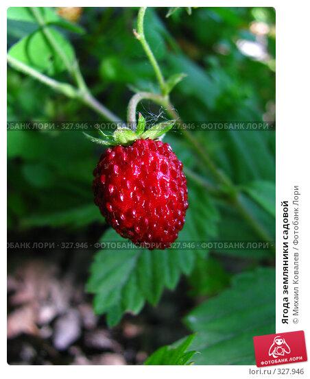 Ягода земляники садовой, фото № 327946, снято 18 июня 2008 г. (c) Михаил Ковалев / Фотобанк Лори