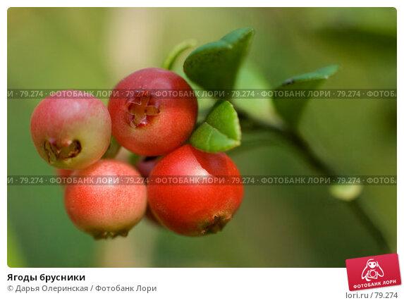 Купить «Ягоды брусники», фото № 79274, снято 15 августа 2007 г. (c) Дарья Олеринская / Фотобанк Лори