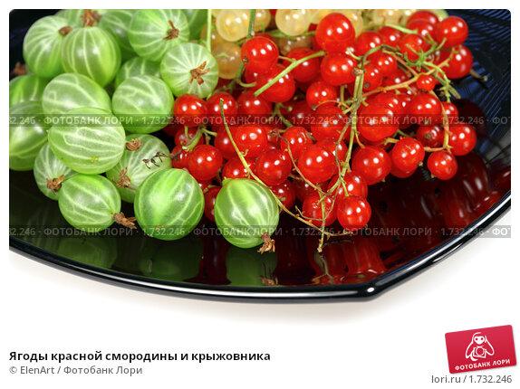 Купить «Ягоды красной смородины и крыжовника», фото № 1732246, снято 16 июля 2009 г. (c) ElenArt / Фотобанк Лори