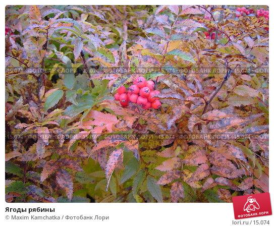 Ягоды рябины, фото № 15074, снято 3 октября 2006 г. (c) Maxim Kamchatka / Фотобанк Лори