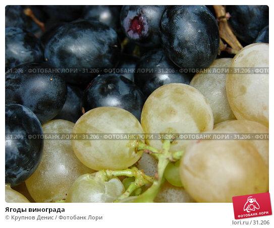 Ягоды винограда, фото № 31206, снято 29 декабря 2006 г. (c) Крупнов Денис / Фотобанк Лори