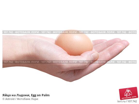 Купить «Яйцо на Ладони, Egg on Palm», фото № 107742, снято 23 апреля 2018 г. (c) Astroid / Фотобанк Лори