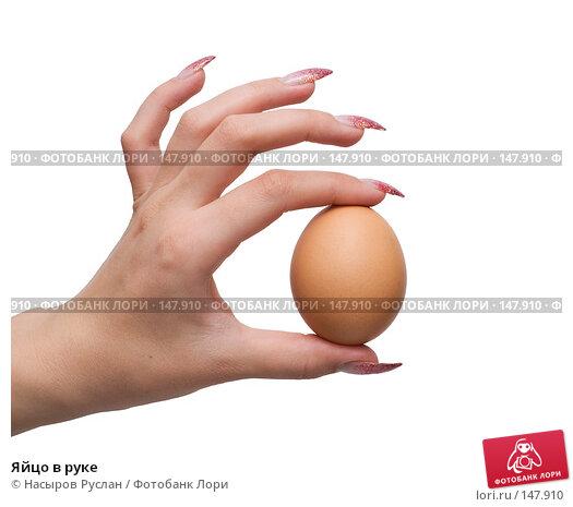 Яйцо в руке, фото № 147910, снято 8 декабря 2007 г. (c) Насыров Руслан / Фотобанк Лори