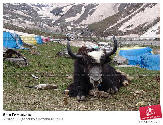 Купить «Як в Гималаях», фото № 148578, снято 26 мая 2005 г. (c) Игорь Сидоренко / Фотобанк Лори