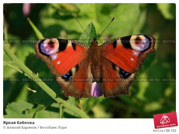 Яркая бабочка, фото № 88102, снято 23 сентября 2007 г. (c) Алексей Баринов / Фотобанк Лори
