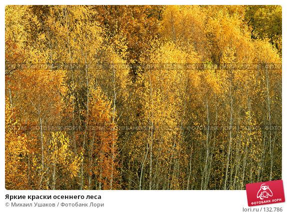 Яркие краски осеннего леса, фото № 132786, снято 23 октября 2007 г. (c) Михаил Ушаков / Фотобанк Лори