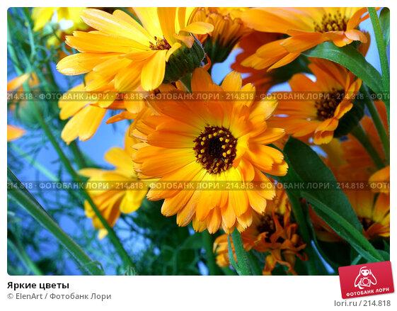Купить «Яркие цветы», фото № 214818, снято 25 апреля 2018 г. (c) ElenArt / Фотобанк Лори